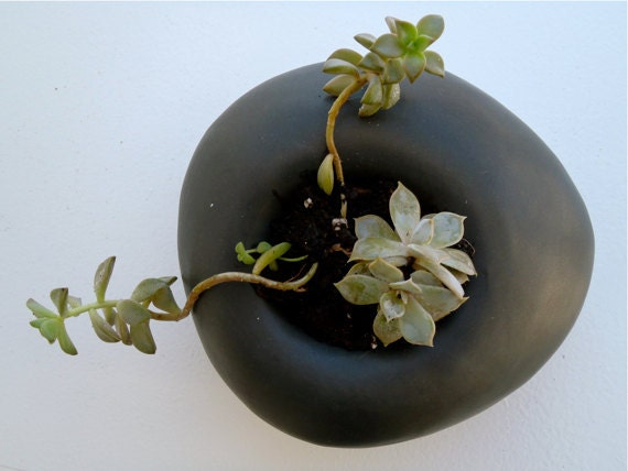 Matte Black Sculptural Planter for Succulents