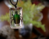 Large Green Rose Chafer Beetle Resin Necklace