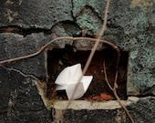 Linen  (Original Cuaresma installation photograph, 5 x 7 print)