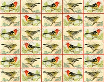 Birds Collage Sheet - Scrapbooking Paper - Digital Download Image - 12x12 inches 300dpi - 1160
