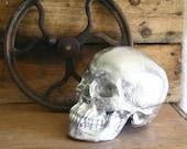 "Chrome Finished Skull - Skeleton Head - 8""-  Bone Head"