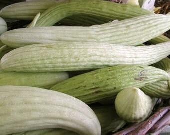 """Cucumber / Melon Seeds - """"Armenian"""" Cucumber"""