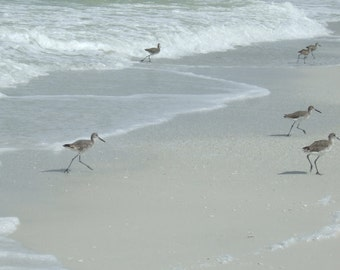 Set of 5 Blank Photo Note Cards Sandpipers on the Beach