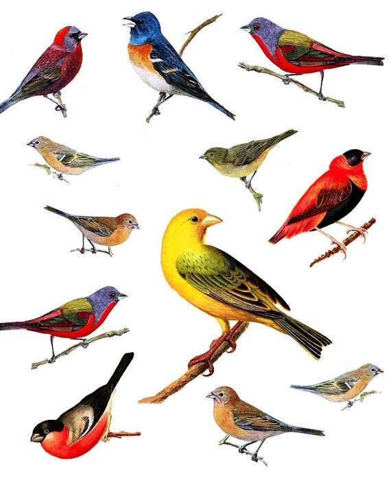 Types of baby birds - photo#20