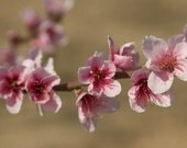 Almond Blossom Print - Pink and Beige Wall Art