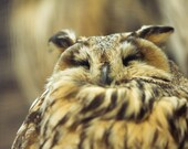 Owl Bird Photograph, Wildlife Fine Art Photography, Woodland photograph, autumn natural, Any Size