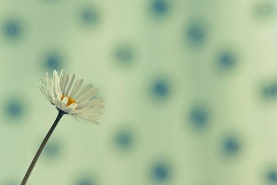 Daisy Flower Photography, Macro Minimalistic Photography Print  8x10 8x12 11x14 10x15 16x20 16x24 20x24 20x30 Any Size Print, Large Size