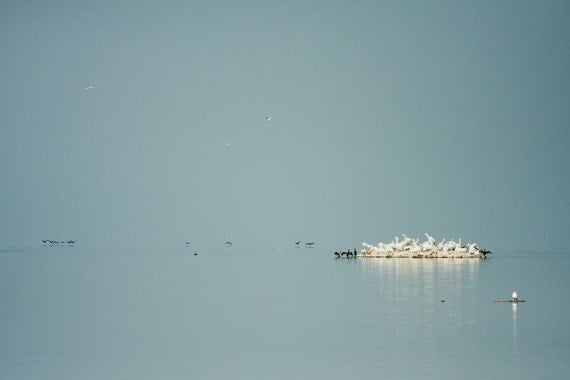 Wildlife Photography, Pelicans and Cormorans Greece in Kerkini Lake 8x12, Wildlife Photography, Pastel Blue