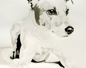 "Ink and Brush Drawing on Watercolor Paper Jack Russell 11"" x 14"" Print"
