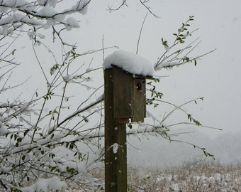 Bird House in Snow / Bird House Print / Snow Covered Birdhouse / Photo Picture Card / Free US Shipping