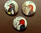 Bird Pinback Buttons - Woodpeckers Set of 3