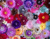 """50  Mix Assorted Flower Heads-15mm""""-5.5"""""""