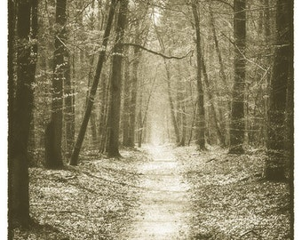 "Foret de Fontainebleau in France 8""X12"" photograph."