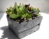 Rustic grey leaf imprint cement planter with succulent garden