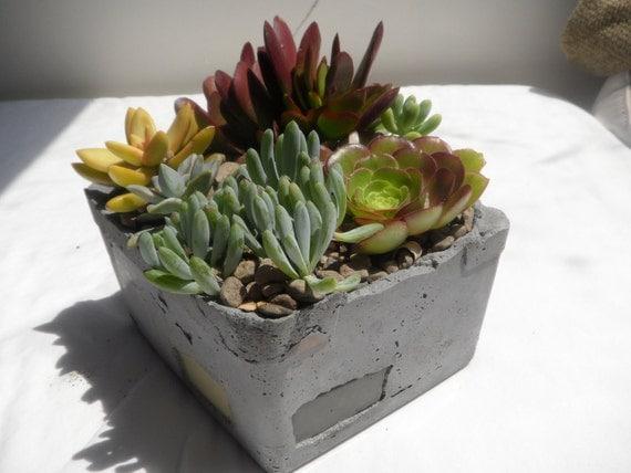 Beautiful succulent garden in a unique hand created cement planter.
