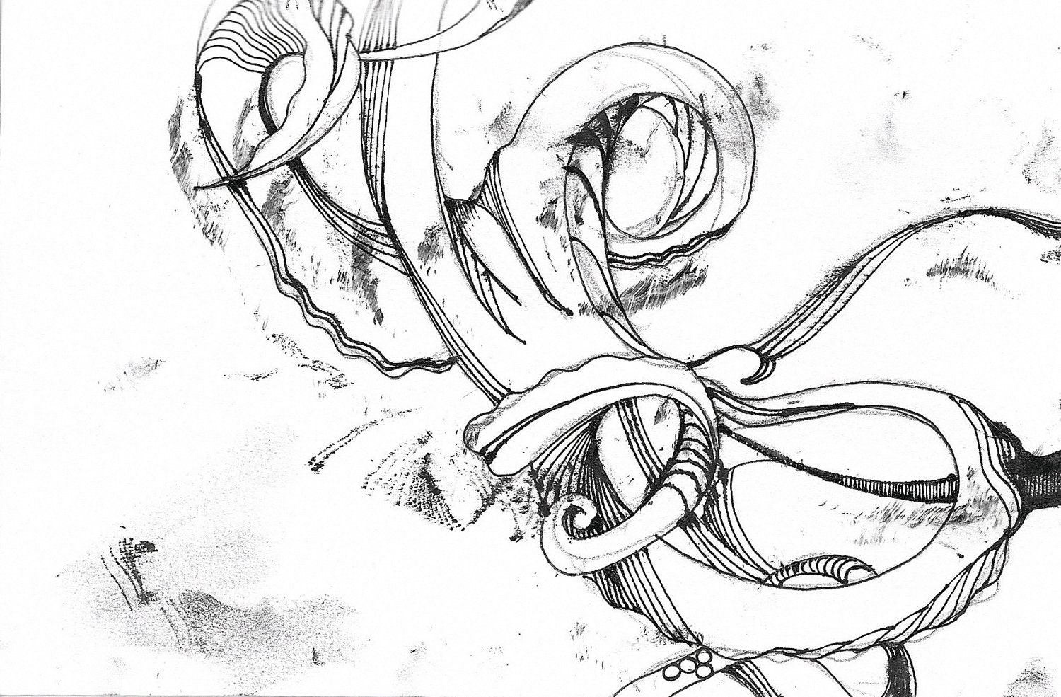 Black And White Octopus Drawing Octopus drawing - leaking