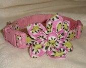 Custom adjustable collar and accessory bundle