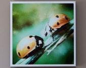 "Ladybugs 12"" x 12"" Canvas Print - ""Space Bugs"""