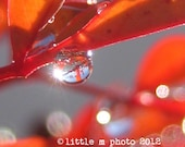 Fine Art Macro Photography 8x10 In the Orb Water Droplettes