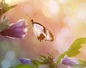 Butterfly Flower Photo, Morning Glories at Dawn, Soft and Romantic Nature Photography