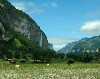 Switzerland cows in Lauterbrunnen