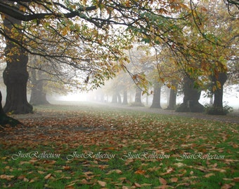"Misty Day 1   in Greenwich Park London 6"" x 9"" Photoprint"