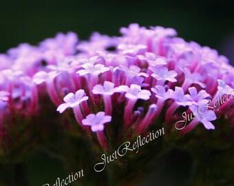 Purple Dream Floral Fine Art Photograph Photoprint