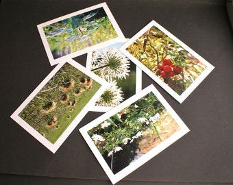 5 Forest Nature Theme Fine Art Photo Greeting Cards Notecards With Envelopes