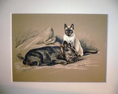 Bulldog and siamese cat Signed mounted 1936 Lucy Dawson Berbay's Lad dog plate/print Unique  Christmas Thanksgiving Birthday dog lover gift