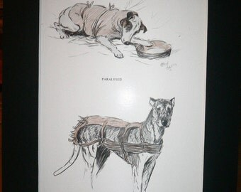 SALE Signed mounted 1930s Cecil Aldin Boarhound & fox terrier dog plate/print Unique gift