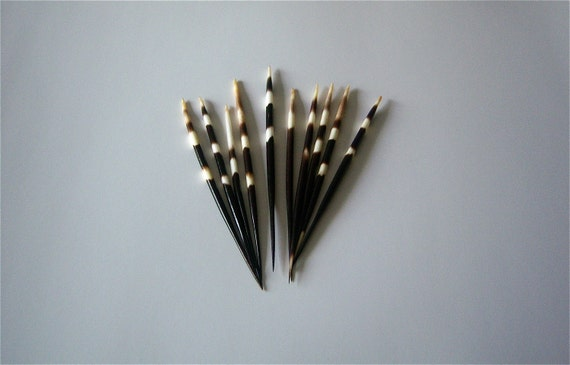 2 African Porcupine Quills , Banded , Natural , Cleaned , Sanitized , Best Price Anywhere