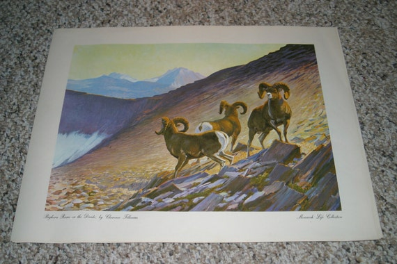 Reserved for John Art Print by Clarence Tillenius - Monarch Life Collection - Bighorn Rams