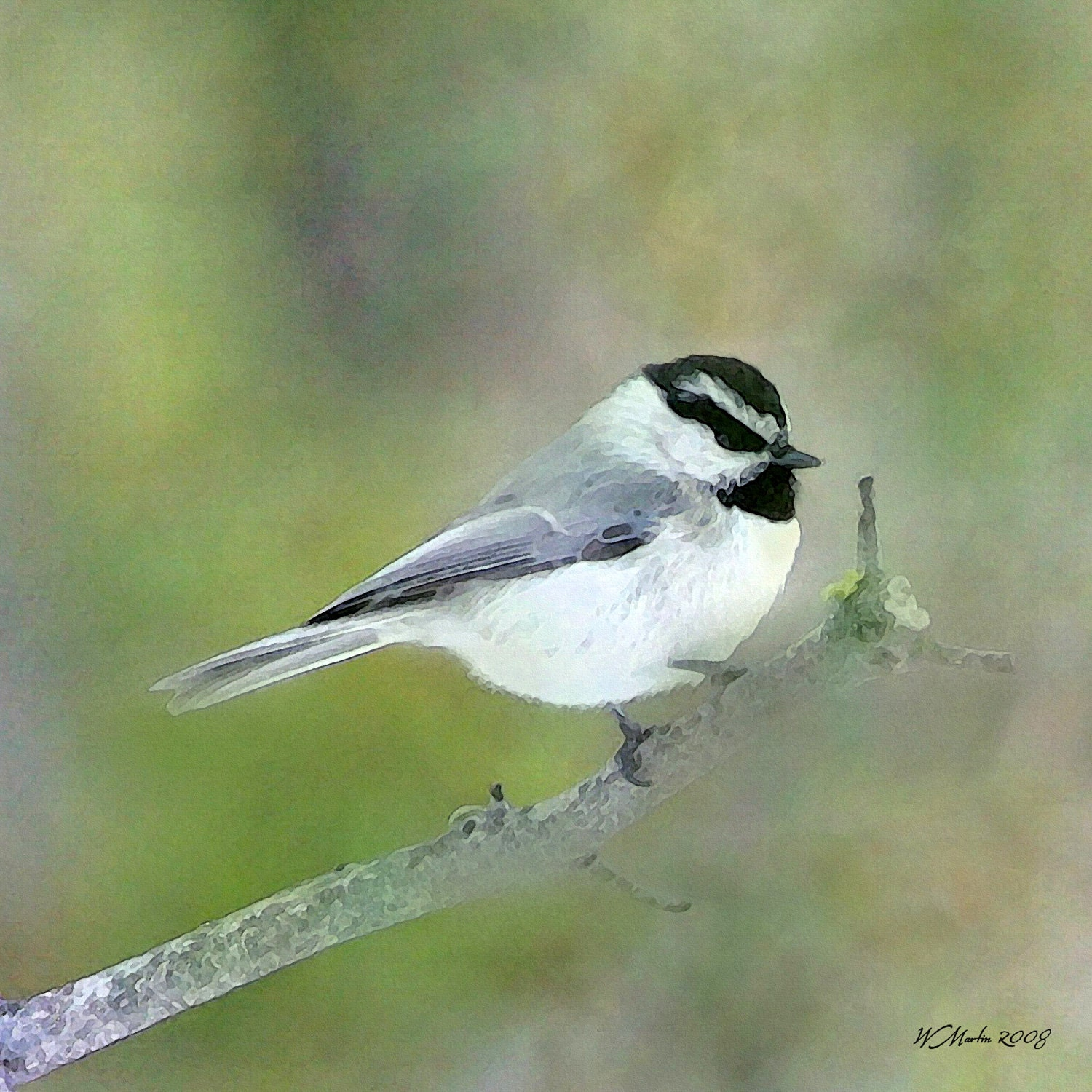 Chickadee Resting painting wildlife painting bird by WiMDesigns