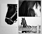 Horse Trio Set of 3 sale  5 x 7 inch Fine Art Print horse half price animal black and white gentle barn farm country ride