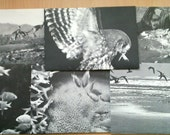 Set of 6 recycled envelopes from old book. Unique envelopes. Animals. Black and white photos.