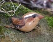Little Wrenn bird- polymer clay bead