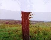 A Forgiving Landscape - Double-Exposed Tree, Fine Art Print