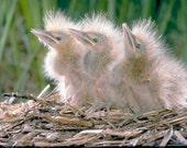 Birds Still Nesting - 11 x 14 Photograph   H-1011 - AmericanPhotographer