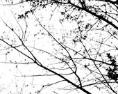 Abstract Art Original 5x7 Black And White Photography Dreamy Beautiful Branches 2 Fine Art Print