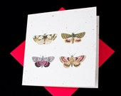 Beautiful Victorian Butterflies / Eco-Friendly Plantable Seeded Card