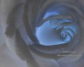 Blue rose - Fine Art Photography
