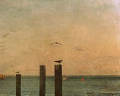 Gulls and Buoys Fine Art Photo Print of gulls resting on pilings near sunset in Southport, NC coastal seascape beach ocean salt air rustic