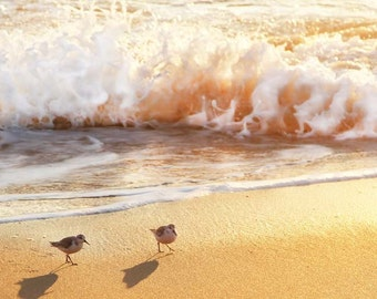 Nature Photography Beach Wall Art - Beach Wall Decor - sea gulls birds on sand - golden wave ocean - Fine Art 5x7 Jersey Shore