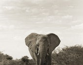 The Elephant on the Road - Fine Art Photograph, 8x12(A4)