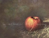 Dreamy Fall Apple - Signed Fine Art Photography -  red, vibrant, kitchen - 5x5 print - GeriBecker