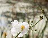 8x10 Photograph, Image, Print, Art, Decoration, Photography, Florida, Celebration, Flower