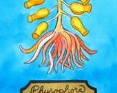 Sea life original painting anemone with bulbs natural history art