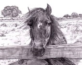 """Signed and Numbered First Print of a Sketch of Magic the Horse Print by Frank Allen Run 8.272 x 11.69"""" (21cm x 29.7cm)"""
