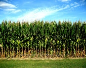 8 x 10 Photograph Corn, Corn Field of Memories Indiana farm life