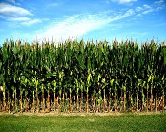 8 x 10 Photograph Corn, Corn Field of Memories Indiana farm life